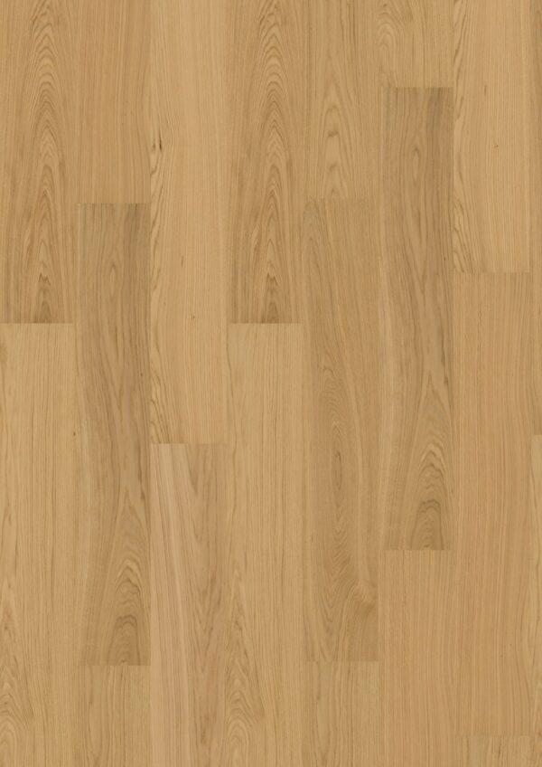 oak nature